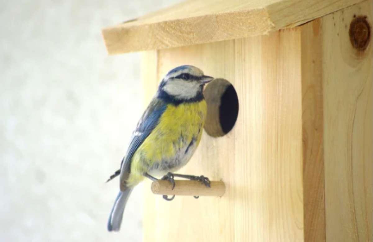 Аренда - жизнь «на птичьих правах»?