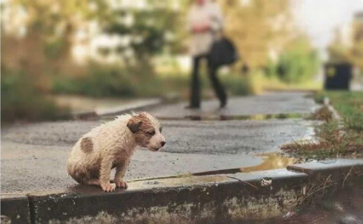 Отношение к животным - показатель?